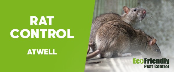 Rat Pest Control  Atwell