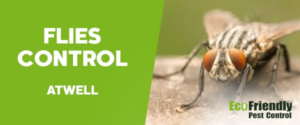 Flies Control  Atwell