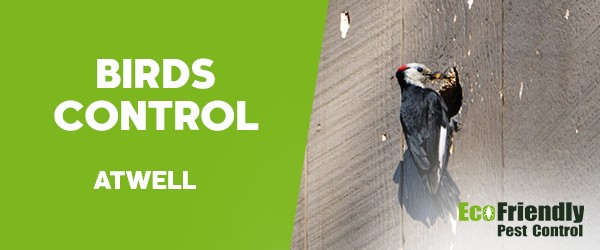 Birds Control  Atwell