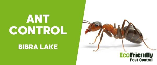 Ant Control Bibra Lake