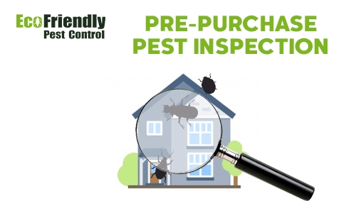 Pre-purchase Termite Inspection  Menora