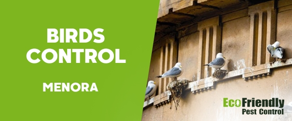 Birds Control  Menora
