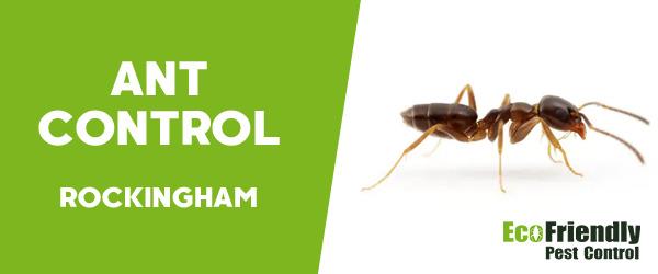 Ant Control Rockingham