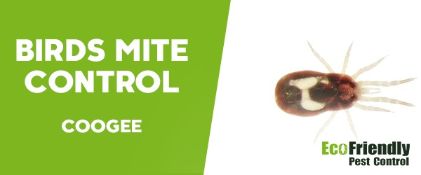 Bird Mite Control  Coogee