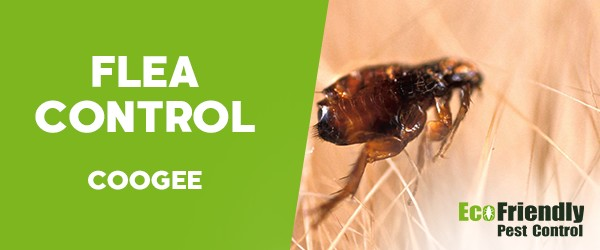 Fleas Control  Coogee