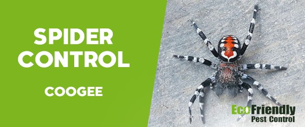 Spider Control  Coogee