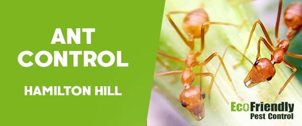 Ant Control  Hamilton Hill