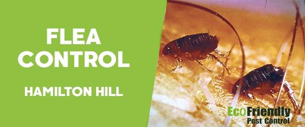 Fleas Control  Hamilton Hill