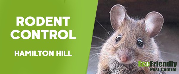 Rodent Treatment  Hamilton Hill