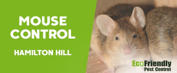 Mouse Control  Hamilton Hill