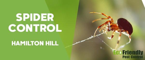 Spider Control  Hamilton Hill