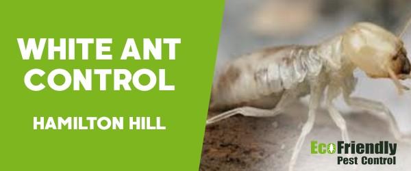 White Ant Control  Hamilton Hill
