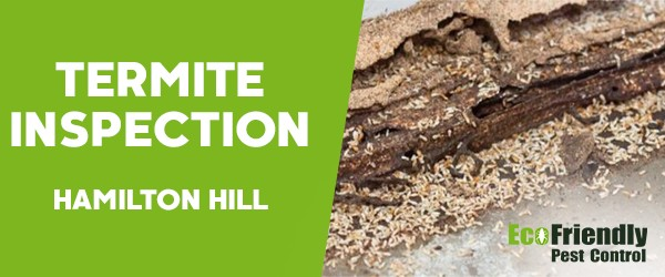Termite Inspection  Hamilton Hill