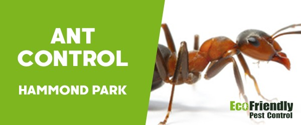 Ant Control Hammond Park