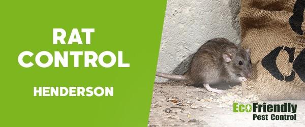 Rat Pest Control  Henderson