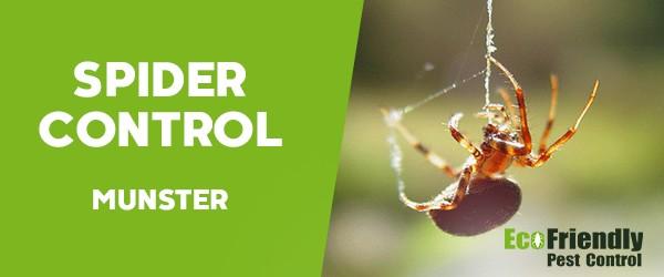 Spider Control  Munster