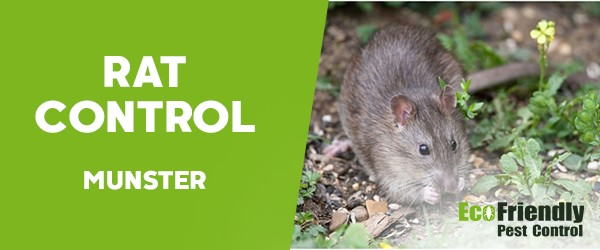 Rat Pest Control  Munster