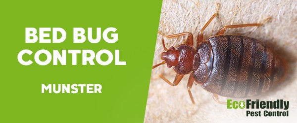 Bed Bug Control  Munster