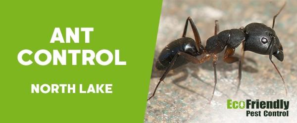 Ant Control North Lake