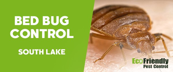 Bed Bug Control  South Lake