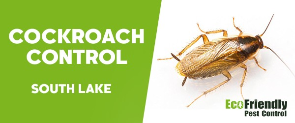 Cockroach Control  South Lake