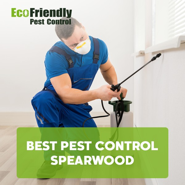 Best Pest Control Spearwood