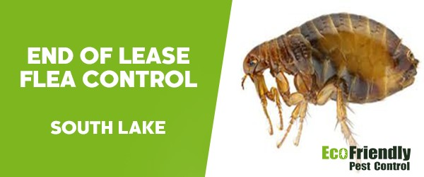 End of Lease Flea Control  South Lake