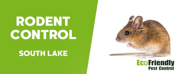 Rodent Treatment  South Lake
