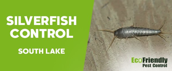 Silverfish Control  South Lake