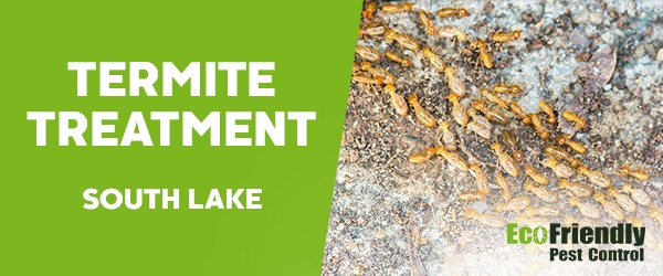 Termite Control  South Lake