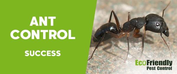 Ant Control Success