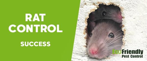 Pest Control Success