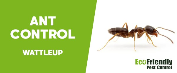 Ant Control  Wattleup