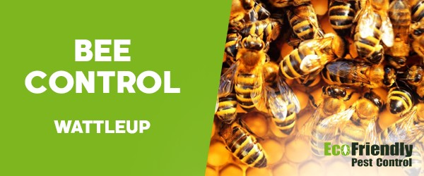 Bee Control  Wattleup