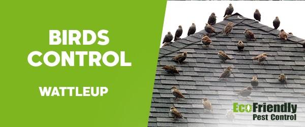Birds Control  Wattleup