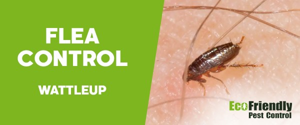 Fleas Control  Wattleup