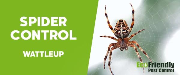 Spider Control  Wattleup