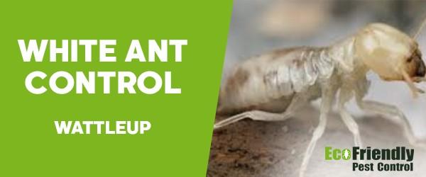 White Ant Control  Wattleup
