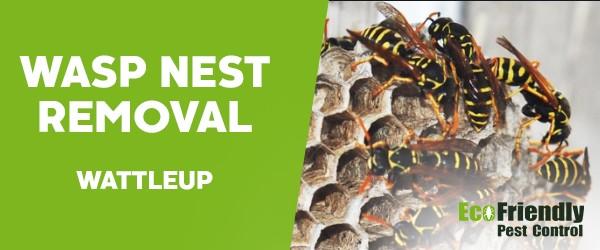 Wasp Nest Remvoal  Wattleup