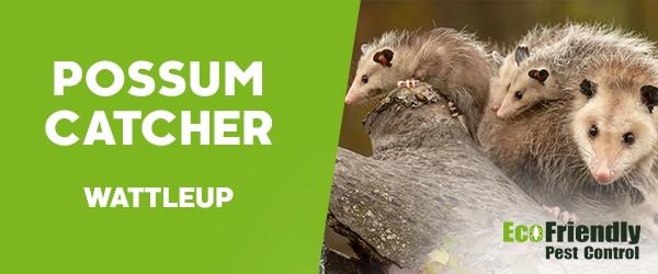 Possum Catcher  Wattleup