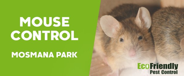Mouse Control  Mosman Park