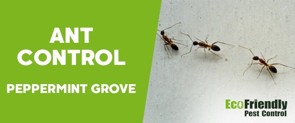 Ant Control  Peppermint Grove