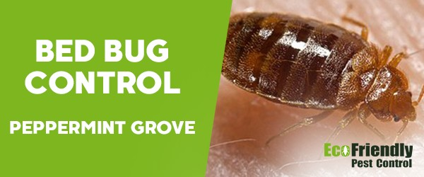 Bed Bug Control  Peppermint Grove