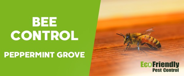 Bee Control  Peppermint Grove