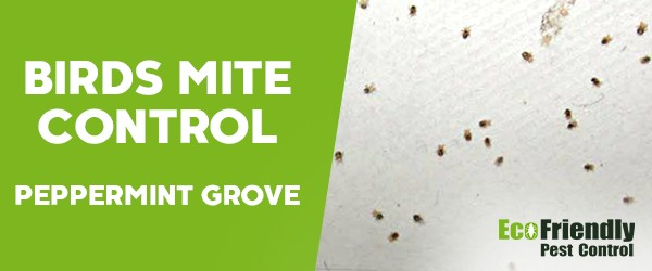 Bird Mite Control  Peppermint Grove