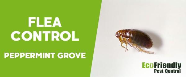 Fleas Control  Peppermint Grove