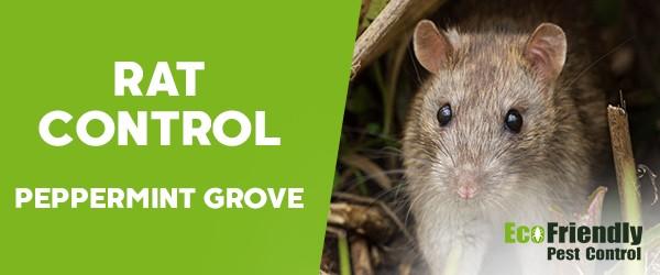 Rat Pest Control  Peppermint Grove
