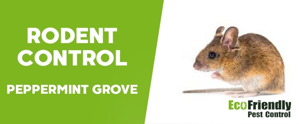 Rodent Treatment  Peppermint Grove