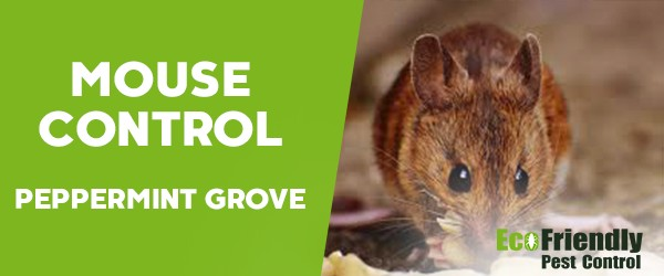 Mouse Control  Peppermint Grove