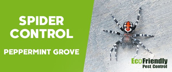 Spider Control  Peppermint Grove